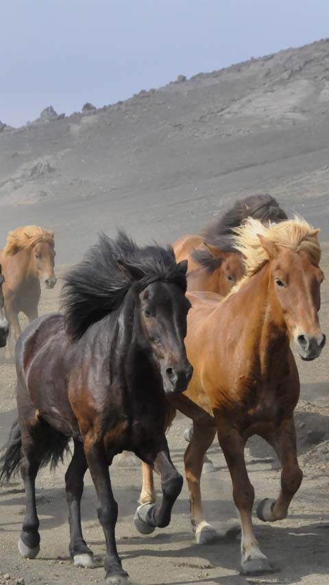horses background wallpaper phone free