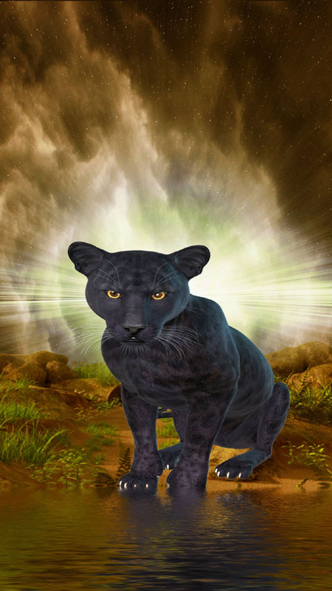 panther black animal wild mysterious wallpaper background phone